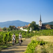 Vélo vignole Alsace